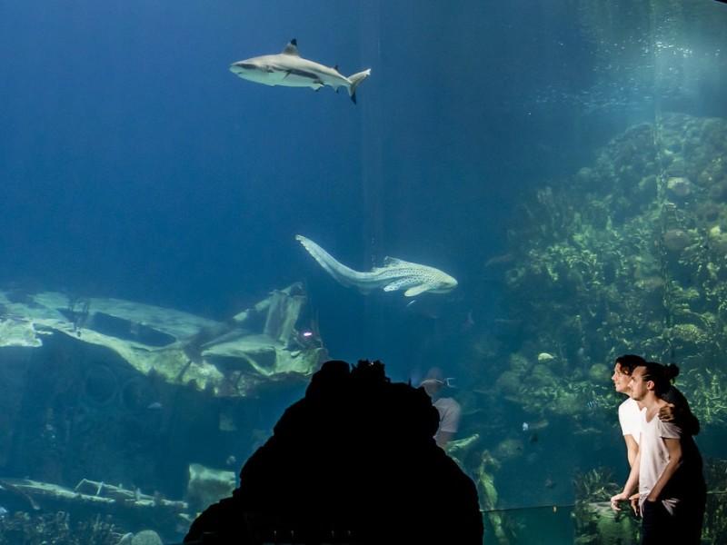 Koppel voor een groot aquarium met haaien. Foto Karin Keesmaat