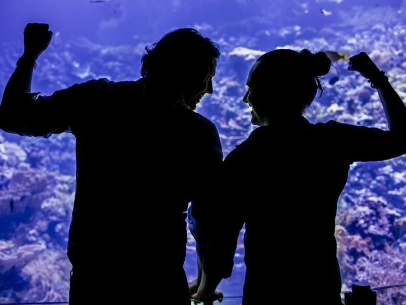 Koppel voor een groot aquarium. Foto Karin Keesmaat