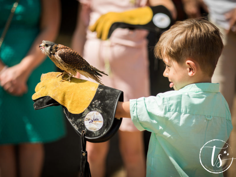 Jongetje heeft roofvogel op de hand, Bruiloft Kim en Ronald, foto Two Sparkle Photography